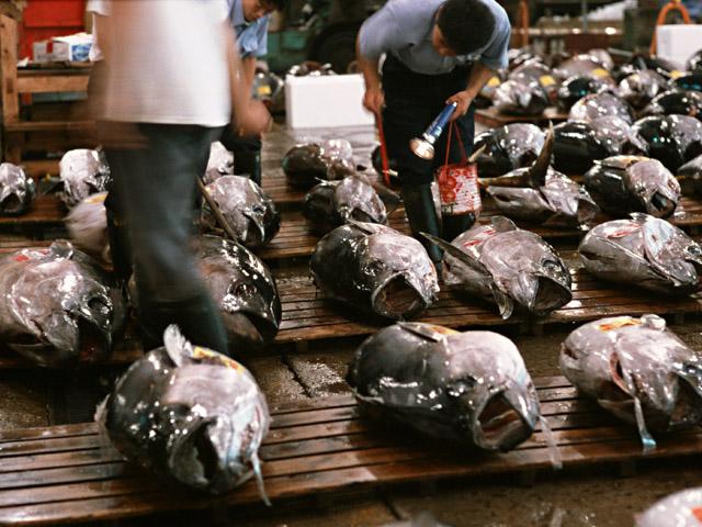 鮮度の高い魚介類