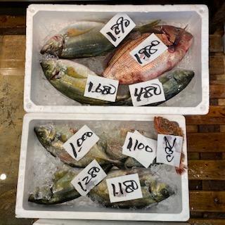 広場 ナルミ 杉本 魚 なるぱら